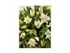 Lily-casket-spray