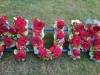 Roses Loose