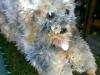 Floral Yorkshire terrier